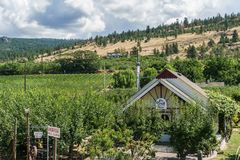 Penticton, Canada - August 04, 2018 : View of vineyard in the Okanagan Valley Penticton British Columbia Canada. Penticton, Canada - August 04, 2018 : The Trail royalty free stock images