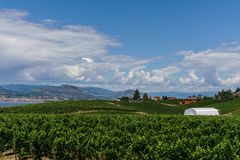Penticton, Canada - August 04, 2018 : View of vineyard in the Okanagan Valley Penticton British Columbia Canada. Penticton, Canada - August 04, 2018 : View of stock photo