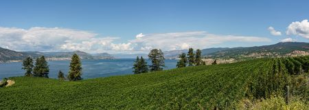 Penticton, Canada - August 04, 2018 : View of vineyard in the Okanagan Valley Penticton British Columbia Canada. Penticton, Canada - August 04, 2018 : View of stock photos
