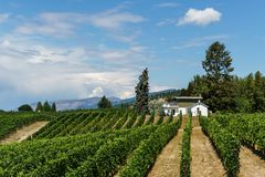 Penticton, Canada - August 04, 2018 : View of vineyard in the Okanagan Valley Penticton British Columbia Canada. Penticton, Canada - August 04, 2018 : View of royalty free stock photos