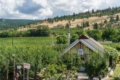 Penticton, Canada - Augustus 04, 2018: Mening van wijngaard in de Okanagan-Vallei Penticton Brits Colombia Canada royalty-vrije stock afbeeldingen