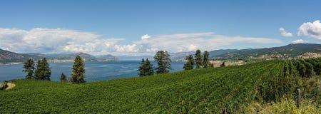 Penticton Kanada - Augusti 04, 2018: Sikt av vingården i den Okanagan dalen Penticton British Columbia Kanada Arkivfoton