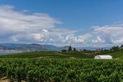 Penticton Kanada, Sierpień, - 04, 2018: Widok winnica w Okanagan Penticton Dolinnych kolumbiach brytyjska Kanada zdjęcie stock