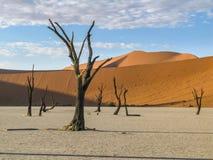 Pentola asciutta, Namibia Fotografia Stock Libera da Diritti