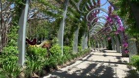 Pentola da passeggiata in parchi del sud della Banca a Brisbane video d archivio