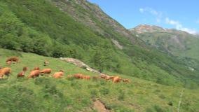 Pentola dalle mucche del gruppo nelle alpi francesi, d'Ornon del passo, Francia alla catena montuosa video d archivio