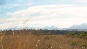 Pentola lenta sopra il campo africano erboso con le montagne nella distanza stock footage