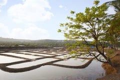 Pentole tradizionali del sale, nerul Bardez, Goa, India fotografie stock libere da diritti