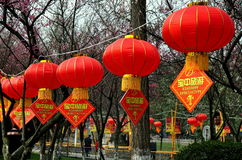 Penzhou, China: Red CNY Lanterns in Park. Colourful red Chinese New Year lanterns with attached diamond-shaped travel agency advertising hang from a cord Royalty Free Stock Photo