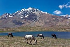 PenziLa See nahe PenziLa-Durchlauf, Zanskar, Ladakh, Jammu und Kashmir, Indien Lizenzfreie Stockbilder