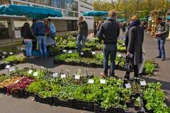 Peoeple en el mercado que cultiva un huerto Foto de archivo