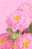 Peonía del rosa de Arificial Imagenes de archivo
