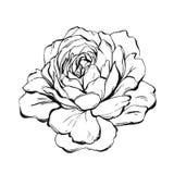 Peonía gráfica de la tinta del extracto hecho a mano del vector o flor color de rosa aislada en el fondo blanco Elementos del dis ilustración del vector