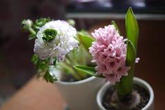 Peonía y jacinto Foto de archivo libre de regalías