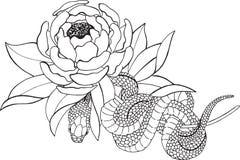 Peonía y serpiente Imagen de archivo
