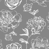 Peonías asiáticas de la tinta en fondo gris libre illustration