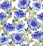 Peonías azules en blanco Foto de archivo