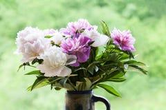 Peonías blancas y rosadas Imágenes de archivo libres de regalías