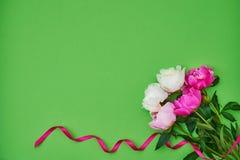 Peonías blancas y rosadas adornadas con la cinta rosada en backg verde Fotografía de archivo