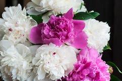 Peonías blancas y rosadas en fondo de madera Fotografía de archivo
