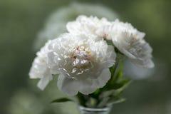 Peonías en florero en ventana Imagen de archivo libre de regalías