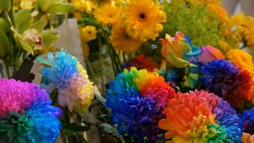 Peonías multicoloras interesantes inusuales hermosas del arco iris, margaritas, rosas Selección de flores, color inusual de la fl almacen de video