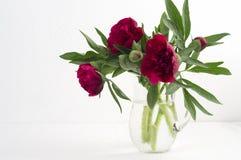Peonías rojas grandes del ramo del jardín en un jarro de cristal Fotos de archivo