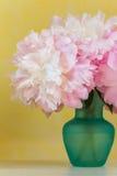 Peonías rosadas Foto de archivo libre de regalías