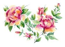 peonías rosadas de la acuarela Imagen de archivo libre de regalías