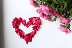 Peonías rosadas de las flores en un fondo blanco y los pétalos aman, redactan amor hicieron de pétalos fotos de archivo