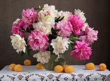 Peonías rosadas y blancas Flores en un florero y albaricoques en TA Imágenes de archivo libres de regalías