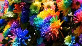 Peon?as multicoloras interesantes inusuales hermosas del arco iris, margaritas, rosas Selecci?n de flores, color inusual de la fl metrajes