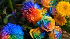 Peon?as multicoloras interesantes inusuales hermosas del arco iris, margaritas, rosas Selecci?n de flores, color inusual de la fl almacen de video