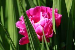 Peon i gräsplanen Royaltyfria Bilder