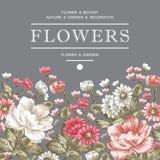 Peonías, manzanilla, marco de los Wildflowers Imagenes de archivo