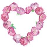 桃红色peones和玫瑰心形框架 向量例证