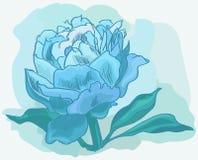 Peonia blu nei colori pastelli Immagini Stock Libere da Diritti