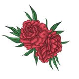 Peonia czerwoni kwiaty Zdjęcia Stock