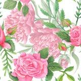 Peonia e Rose Pattern eleganti misere dell'acquerello Fotografia Stock Libera da Diritti