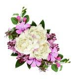 Peonia i dzikich kwiatów skład Obraz Royalty Free