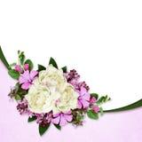 Peonia i dzikich kwiatów skład Fotografia Royalty Free