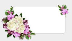 Peonia i dzikich kwiatów skład na biel karcie Obrazy Royalty Free