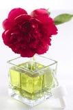 Peonia - istotny olej i pachnidło Fotografia Stock