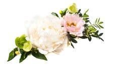 Peonia kwiatów przygotowania na białym tle odizolowywającym świąteczny Obraz Royalty Free