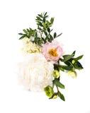 Peonia kwiatów przygotowania na białym tle odizolowywającym świąteczny Obrazy Stock