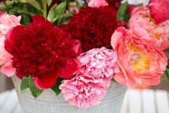Peonia kwiatów wiązka w czerwieni i menchii kolorach Zdjęcia Stock