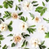 Peonia kwiatów wzór odizolowywający na białym tle Fotografia Stock