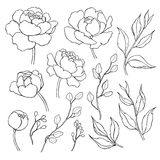 Peonia kwiat i liścia kreskowy rysunek Wektorowa ręka rysujący kontur Zdjęcia Stock