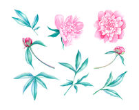 Peonia kwiatu akwareli ilustracja Obrazy Royalty Free