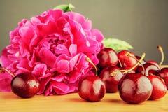 Peonia rosa con le ciliege Fotografia Stock